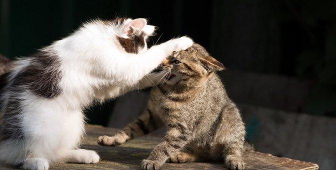 突然攻撃的に…猫の『激怒症候群』とは?正しい対処法4つ