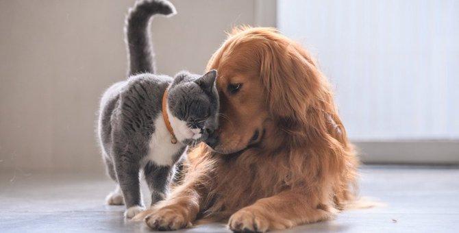 猫は仲間の死を理解できる?考えられる変化とケア方法