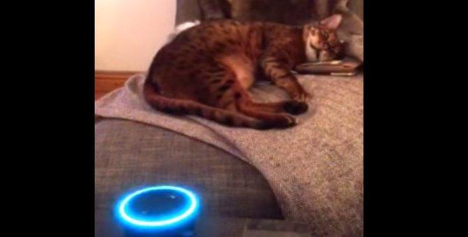 アレクサーのリアルな鳴き真似に猫ちゃんもびっくり