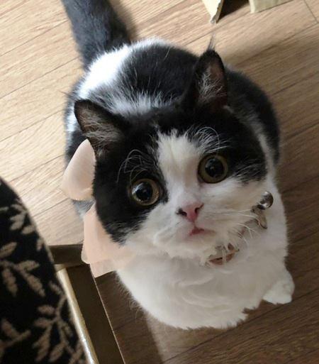 猫がつい甘えちゃう飼い主の性質3つ