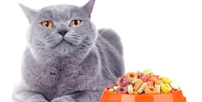猫の貧血に効果的な食事や食べ物5選
