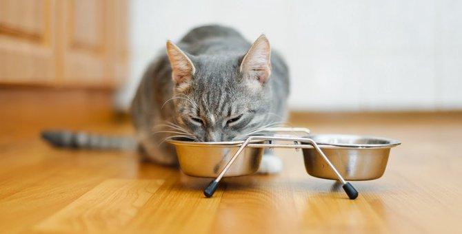 猫の餌台の選び方〜みんなはどうやって選んでいるの?聞いてみた〜