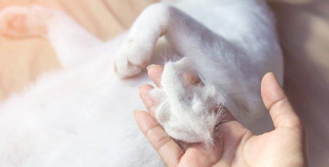 猫のかかとがハゲてる!皮膚の病気なの?後ろ足ハゲの原因を解説