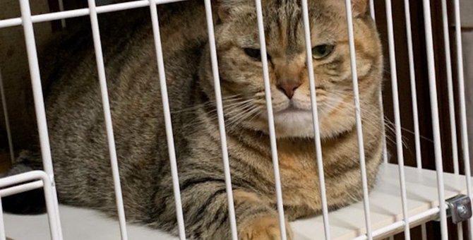 猫との生活にケージを取り入れたい5つの理由