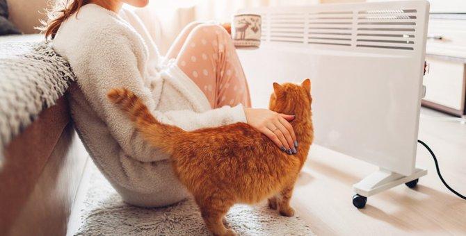 猫に『バシバシ』叩かれるのはなぜ?7つの心理