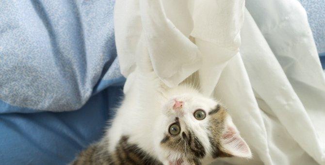 猫がカーテンをボロボロにする…対策出来る5つの事