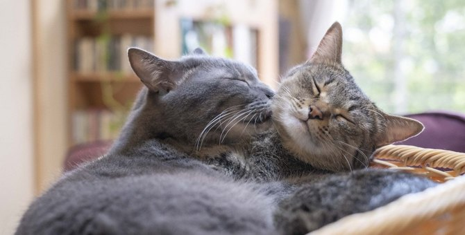 猫に絶対しちゃダメな『愛情表現』3つ