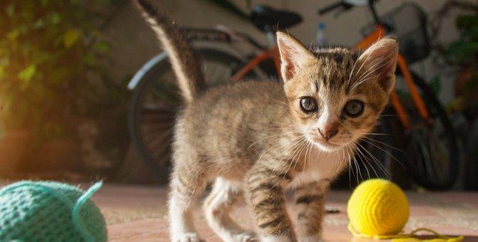 猫だけで遊ぶの厳禁!危険なおもちゃとその理由4つ