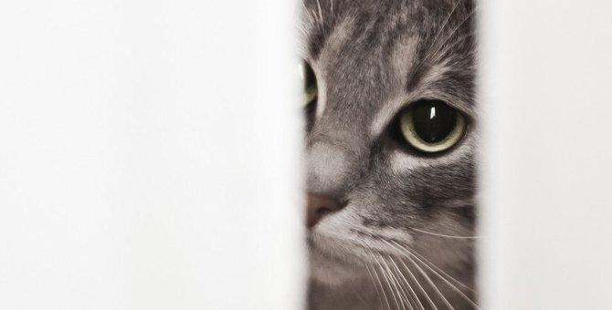 あなたはやってない?間違った愛猫への叱り方4選