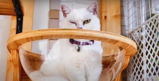 平和で可愛い♡猫さんたちの毎日をのぞき見!