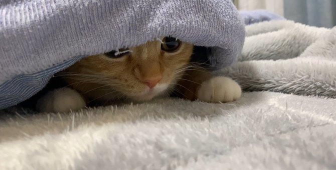 右方向異常なし!身を潜めて左右確認をする猫が警戒しているのは?