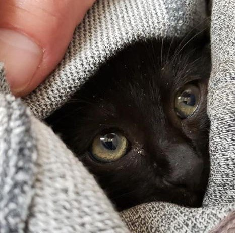 【知っておいて損はない!】猫を保護する時の注意事項