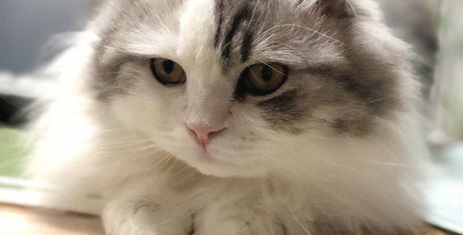 猫がぼーっとしている時に見ているもの5つ