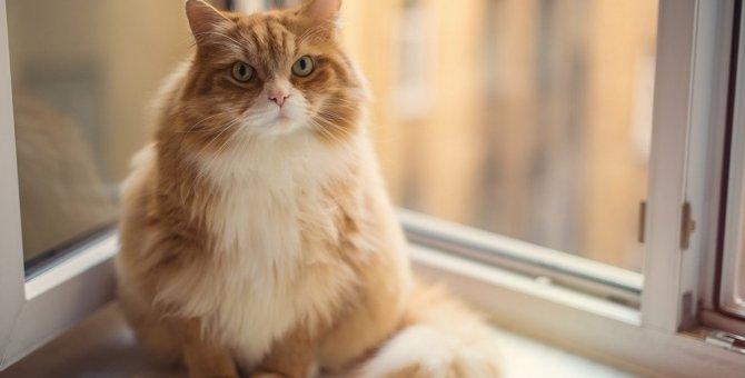 猫にもある『食欲の秋』!肥満防止に絶対すべき5つの対策