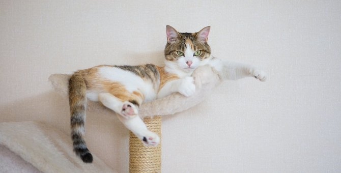 猫ひっかき病の症状、感染経路、治療の方法や予防法まで