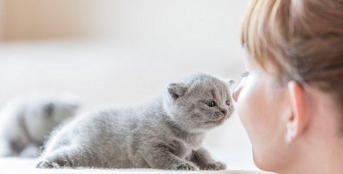 猫にとっての飼い主ってどんな存在?