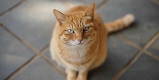 猫はどんな時に『我慢』してしまうの?