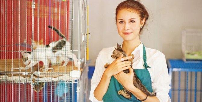 キャッテリーと普通のブリーダーとの違いと猫の譲り受け方