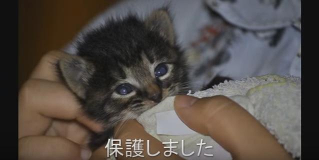 無事に先住猫たちの仲間入りを果たした生後3~5日の子猫ちゃん(movie)