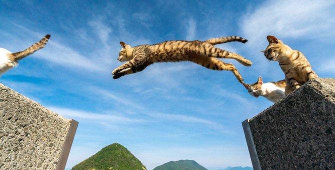 日本全国に存在!「猫」のつく地名とその由来12選
