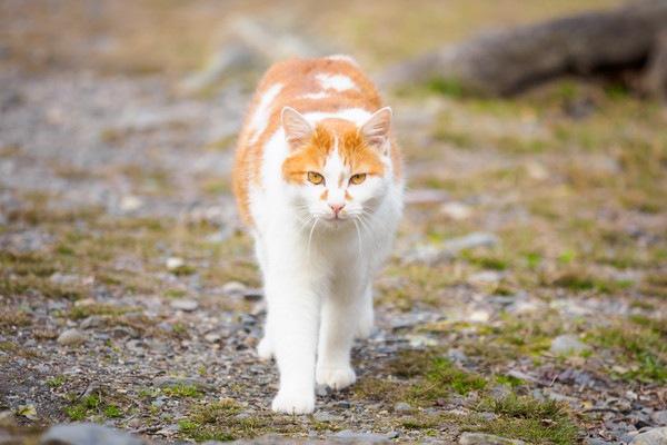 猫は汚いのか 猫嫌いの人が思う7つの理由