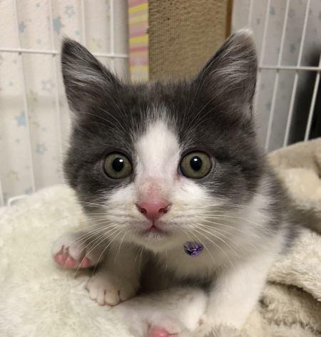愛猫の気持ちがわからない…気持ちを理解してあげる方法5選