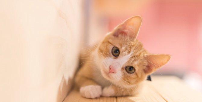 猫が首を横にかしげるのはどんな時?6つの心理