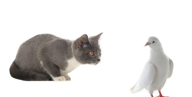 猫が鳥を捕まえてくる理由と一緒に飼うための方法