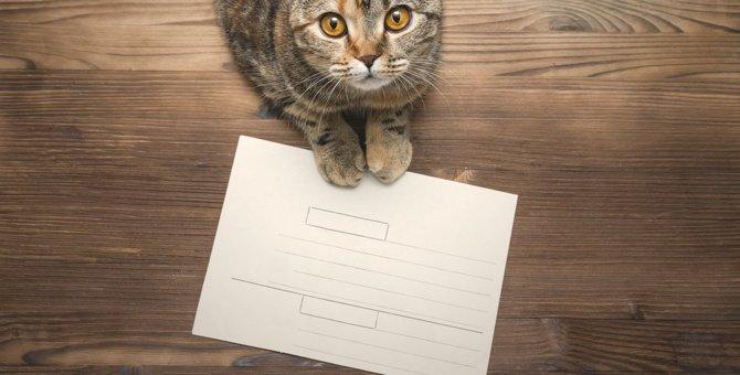 愛猫との思い出を胸に…『ペットロス』を癒す3つのセルフケア