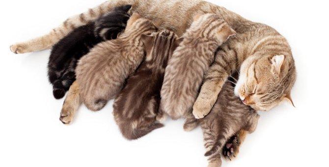 猫の育児放棄・・・原因とその対策について