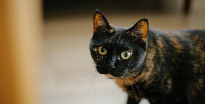 うちの元保護猫が『アイドル』をやめた理由
