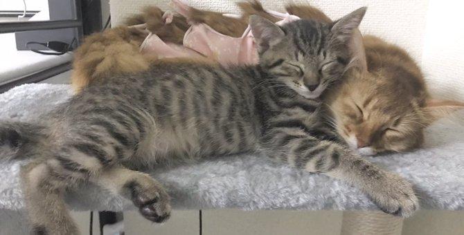 極上癒し♡寄り添って幸せそうに眠る猫達が平和過ぎると話題!