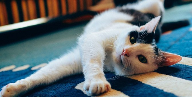 じゅうたんボロボロ!猫がひっかくのをやめさせる方法5つ