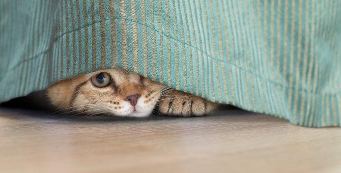 猫の『プライド』をへし折る飼い主の心無い行動4つ
