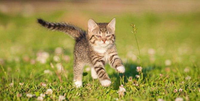 猫が早歩きするのはどんな時?5つの気持ち