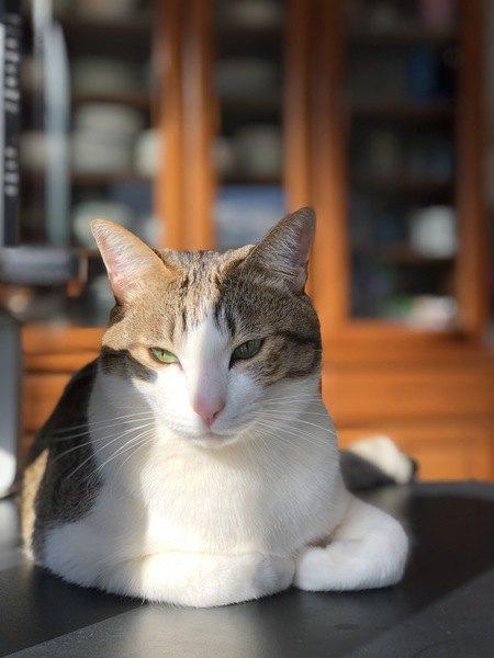 猫が使い捨てカイロ好きなのはなぜ?3つの理由