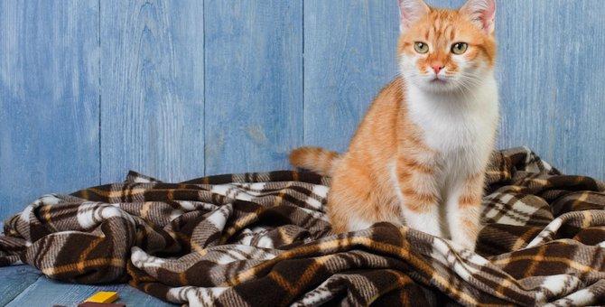 猫がトイレの場所では無い所でホリホリする心理