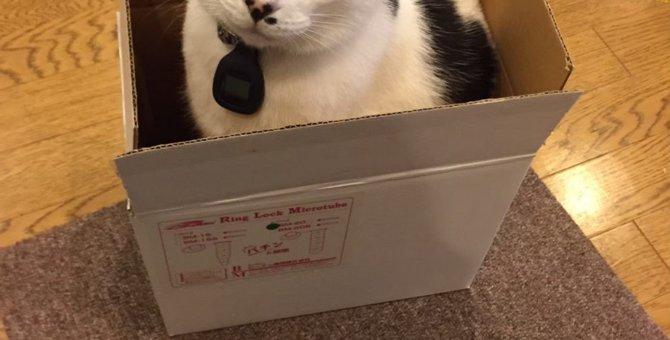 キャットストレススコアで判明。箱があるお部屋にいると猫はストレスを感じにくい事が判明