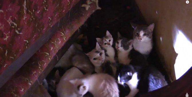 多頭飼育崩壊、ネグレクト…安楽死寸前から生還した奇跡の子猫。