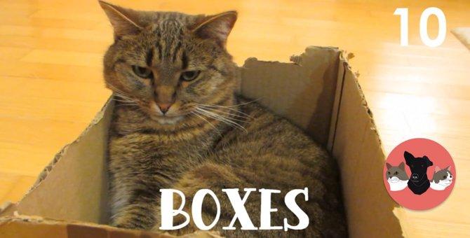 猫を吸い寄せる魔法の場所、10の中から5つ紹介