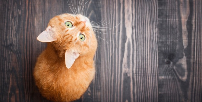 猫がアトピーになる症状とその治療法とは