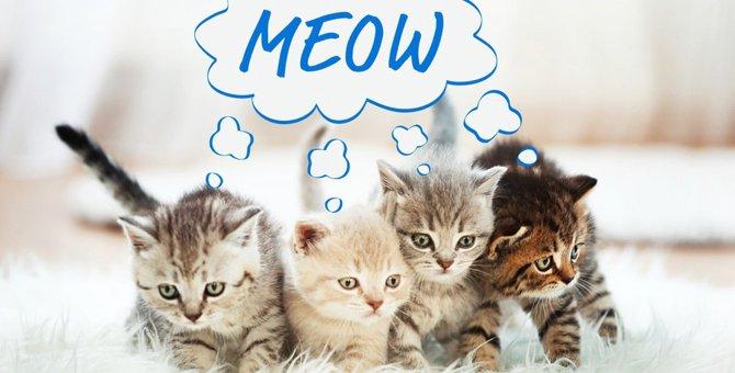 猫の鳴き声動画まとめ
