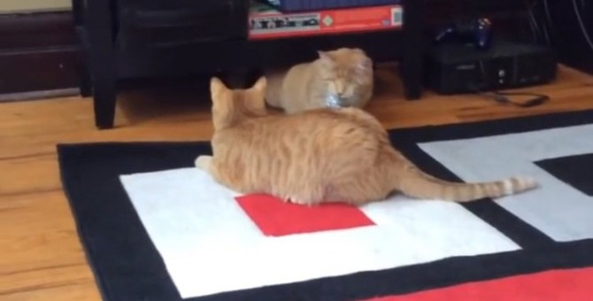 目の見えない猫ちゃん、ボールを見失うも…姉妹の絆により発見!