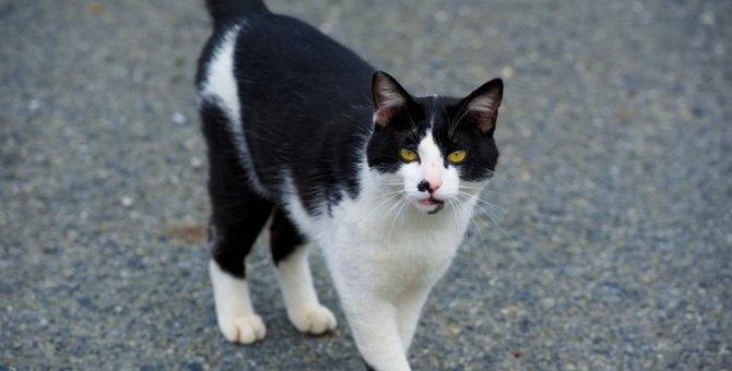 日本で暮らす猫の種類について