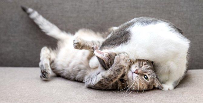 急に飽きたり怒ったり…猫の行動がいつも『急』な理由5つ