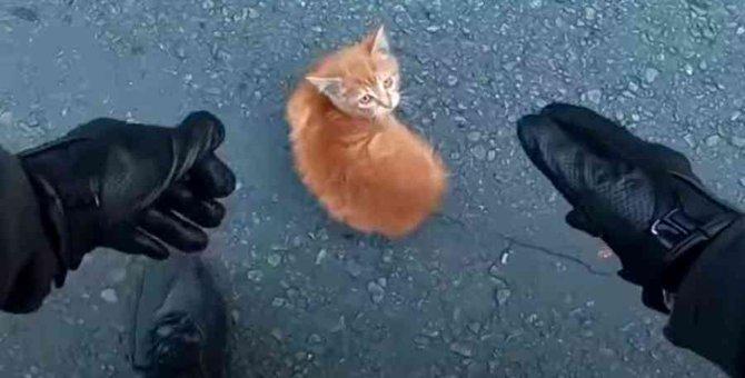 道路の真ん中にたたずむ子猫…間一髪のところを救出!