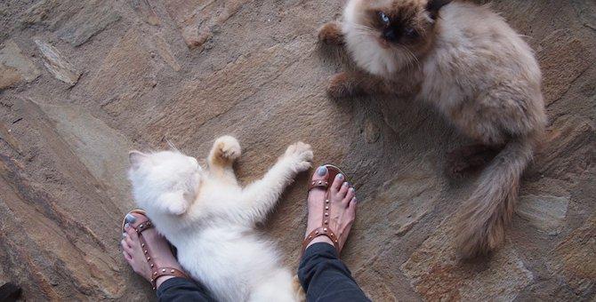猫が足にまとわりつく4つの心理と噛まれた時の対処法