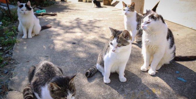 野良猫の病気について解説!病名、見分け方、人にうつる物