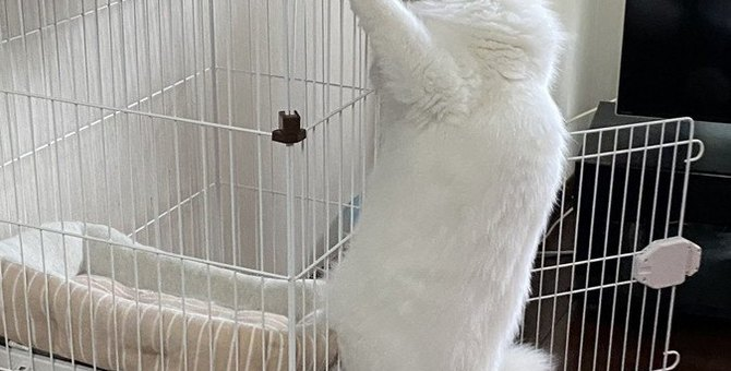 猫に危険な『キャットタワー』とは?注意点3つを解説!