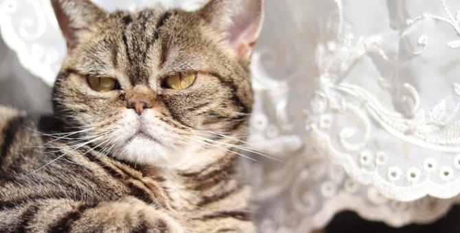 猫が『しつこいニャ!』と感じたときにする仕草4つ